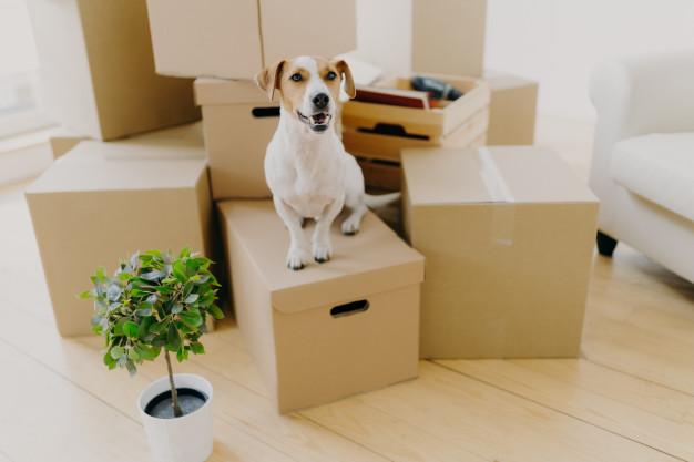 Condo vs House - Disadvantages of Condo